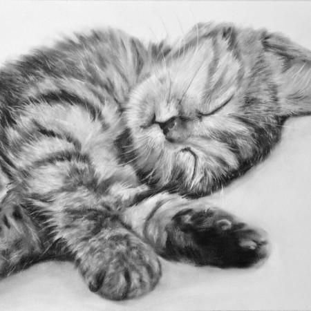 retrato-mascota-gato01-opt