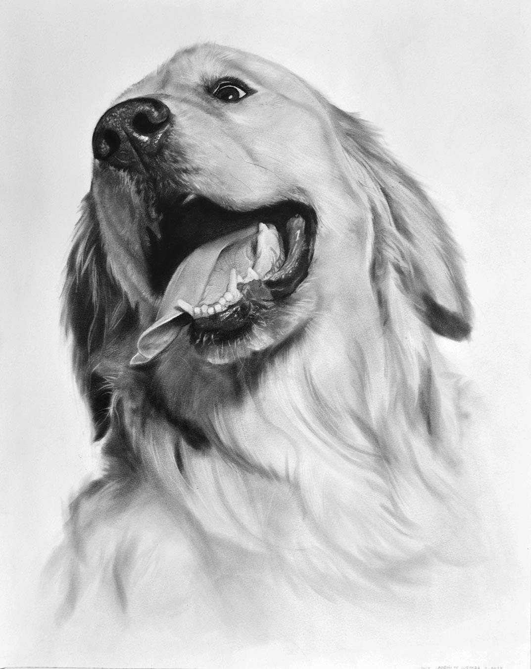 Retratos de mascotas. Retratos al carboncillo. Galería del retrato
